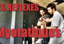 reflexes-myotatiques-musculation-doc-tajizz
