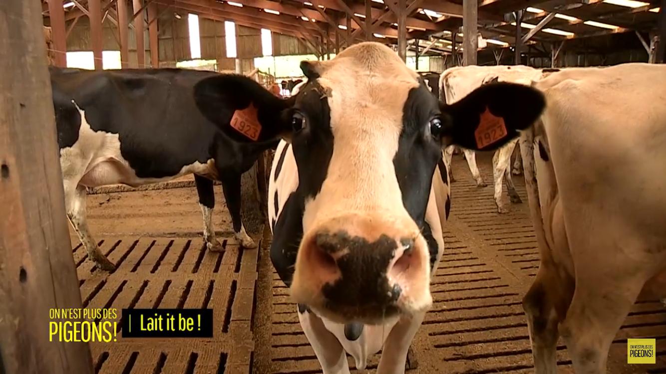 Faut il encore boire du lait de vache ? ONPDP